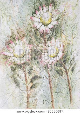 Three Protea Flowers