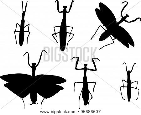 mantis collection - vector