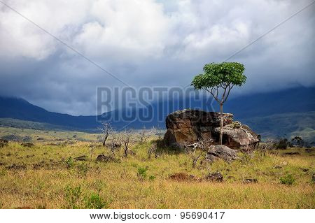 Single Green Tree And Big Rock In Savanna Covered With Yellow Grass