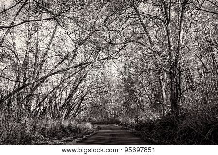 Tree-Lined Road, Black and White, Landscape