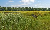 picture of wild horse running  - Foal running in a field with wild flowers in summer