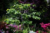 pic of bonsai  - Hornbeam bonsai on a rockery natural background - JPG
