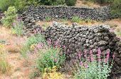 stock photo of stone house  - Ruins of an old lava stone house and typical vegetation of Mount Etna - JPG