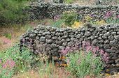 image of stone house  - Ruins of an old lava stone house and typical vegetation of Mount Etna - JPG