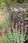 pic of stone house  - Ruins of an old lava stone house and typical vegetation of Mount Etna  - JPG