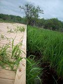 pic of wetland  - A wood boardwalk through the green wetland - JPG