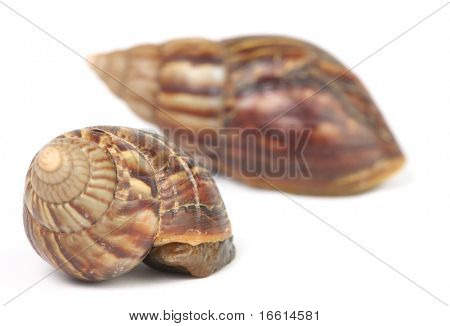 two snail hiding in their shells