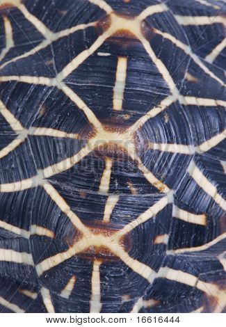a close up shot of the patterned shell of a turtle
