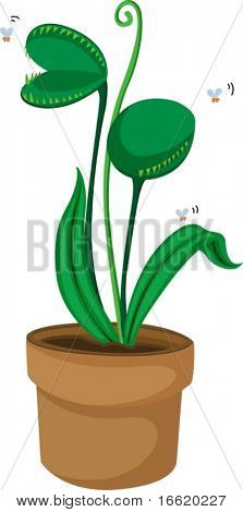 an illustration of a fly trap plant