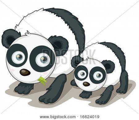 Illustration of two panda bears on white