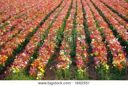 Natural Fresh Flowers