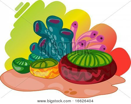 coral reef (vector image also available in portfolio)