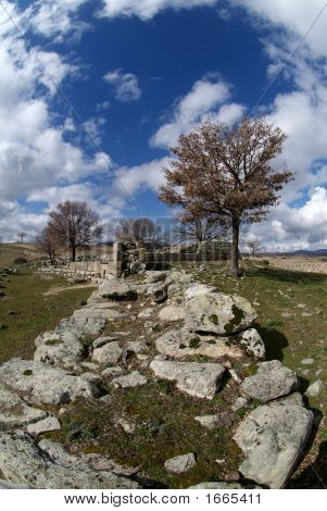 Tree And Ruins