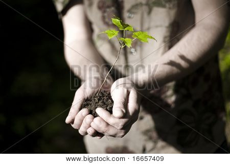 Life In Hands. New Life Concept.