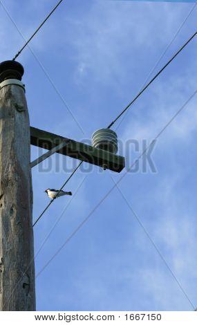 Powerline And Bird