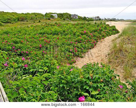 Path Thru Sand Dunes