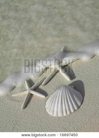two starfishs and sea shell on the beach