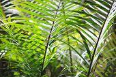 image of chloroplast  - Macro of green leaves - JPG
