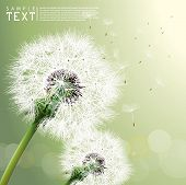 stock photo of fuzz  - Vector Dandelion - JPG