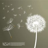 picture of fuzz  - Vector Dandelion - JPG