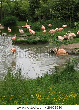 Flamingos in Zurich Zoo