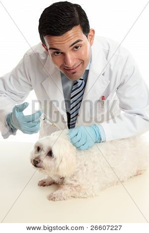 Vet Treating A Sick Animal