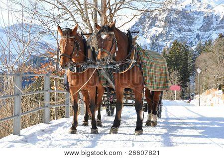 Pareja de caballos. Braunwald, famoso centro de esquí suizo