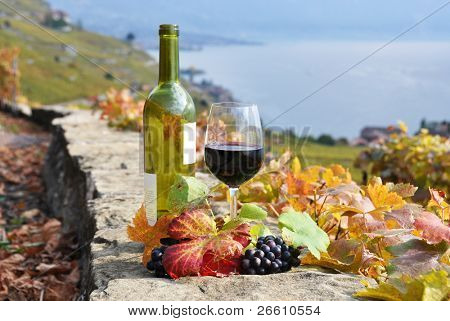 Red wine and a branch of grapes on the terrace vineyard in Lavaux region, Switzerland