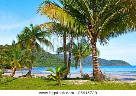 Nice tropical forest on the beach