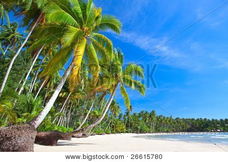 beach scene on a beautiful Island