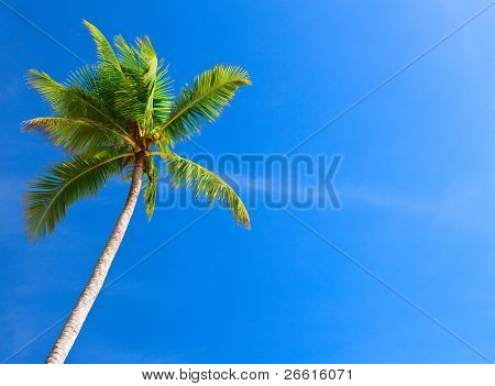 Palm tree in blue sky