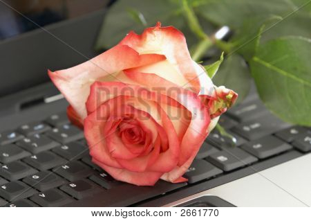 Rose & Computer