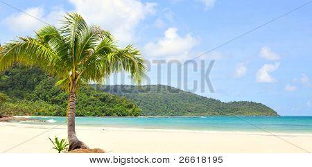 einmal Palm am Strand