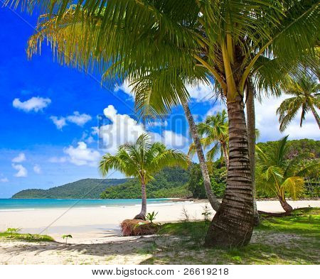 Tropical beach - palm tree, sea water, blue sky background - summer nature