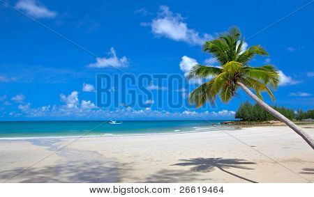Once palm tree on the summer beach near sea water and sky background