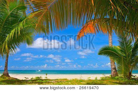 Quadro de árvore palma ao redor de praia do verão, descanso familiar
