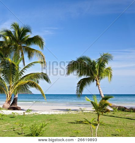 Grass, palm trees, sand, sea and sky. Exotic beach.