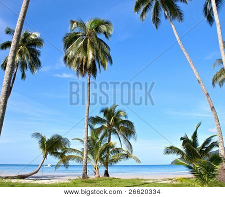 summer sea beach with palm tree