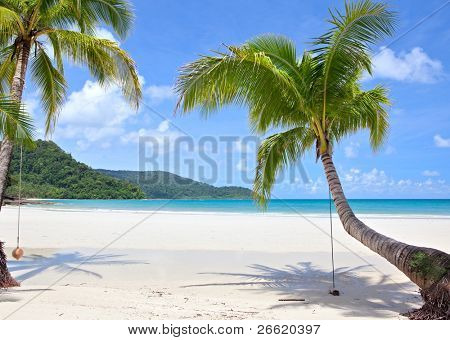 Tropical plants on seashore. Paradise beach.