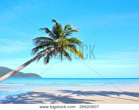 Palm tree over the sand on tropical beach