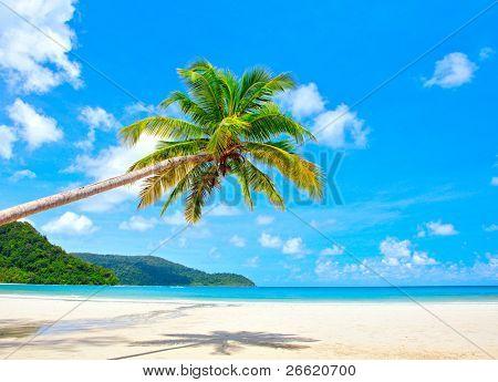 Palmera fantástica playa tropical Resort de lujo