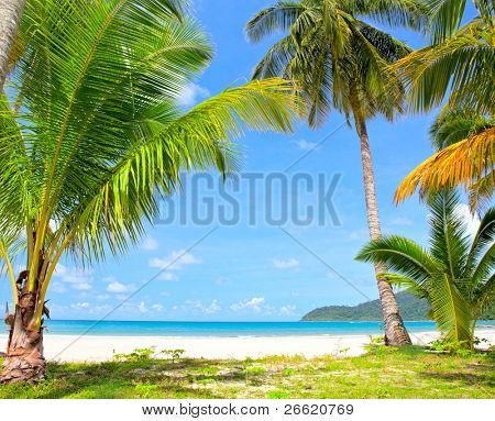 Tropical palm trees on the beach near the sea