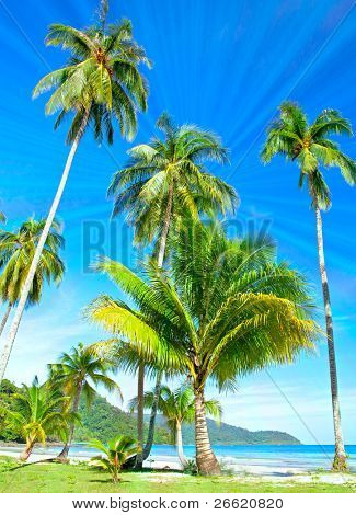 Palm trees on tropical beach near the sea under blue sky. Exotic  nature.