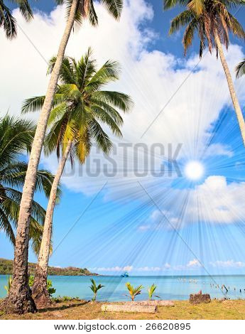 Summer view of palm trees on sandy beach under shining sun.  Tropical summer nature.