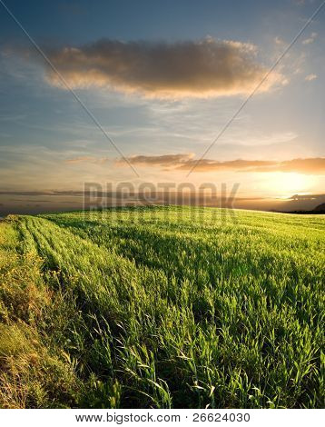sunset on the field of grain