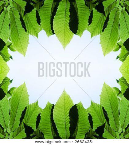 Marco de hojas verdes sobre fondo blanco