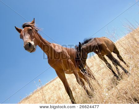 horse and colt in a field of straw