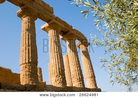 dorics columns with fronds olive tree