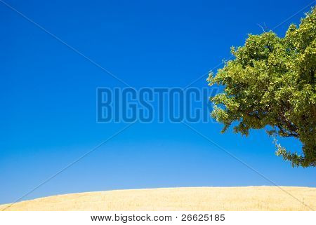 abstract landscape for blue sky, yellow straw and green foliage