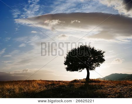 solitary oak tree at twilight